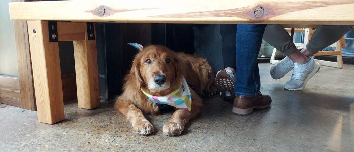 Dog under bench